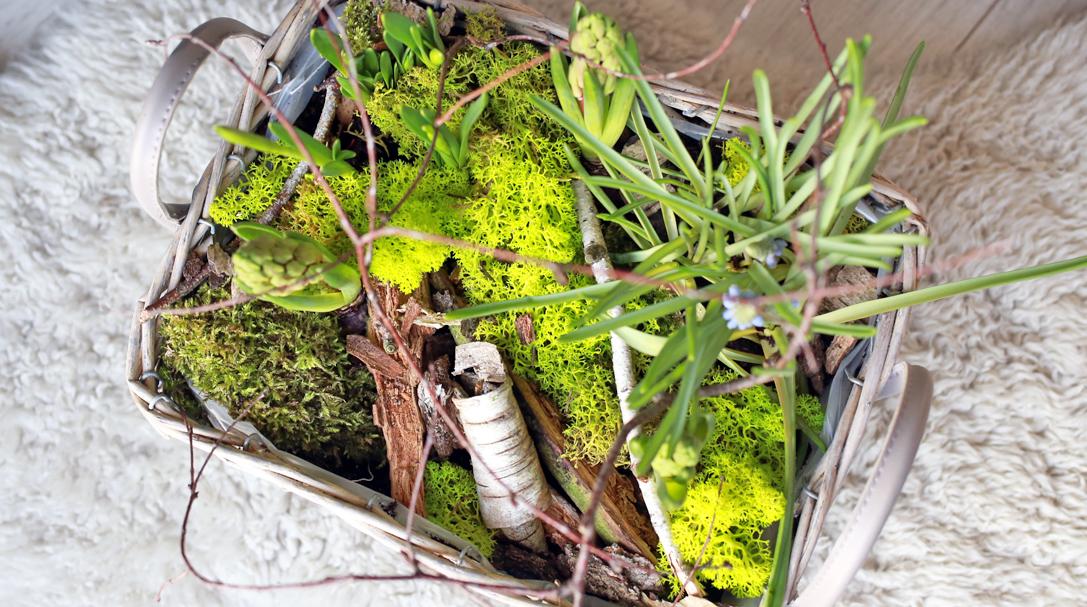 orchideli, dekoracja wielkanocna, las w koszyku
